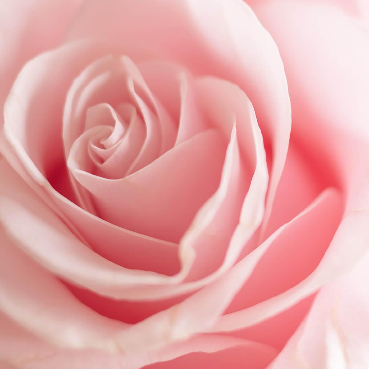 EFEN rose vodka tastes like a fresh rose.